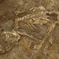 Ancient Britons may have intentionally mummified some of their dead during the Bronze Age, according to archaeologists at the University of Sheffield.
