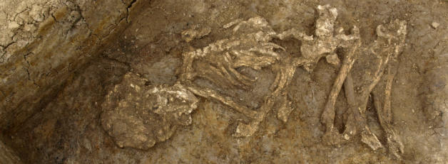 A skeleton found in Britain that was mummified during the Bronze Age. Credit: Geoff Morley